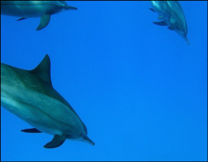 dolphins  by Veronika Matějková