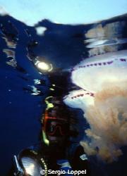 incontro con le meduse by Sergio Loppel