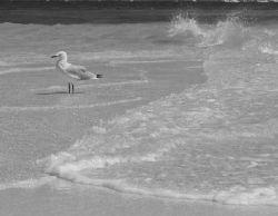 Sea Gull, Exmouth - Western Australia by Penny Murphy