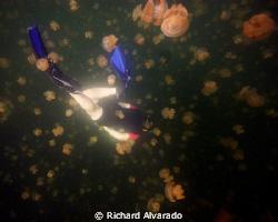 "Snorkeling in ""Jellyfish Lake"" at Eil Malk Island in Pala... by Richard Alvarado"