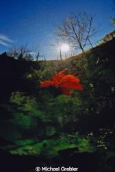 Autumn at Morrison's Quarry. Nikonos V, Sea & Sea 12mm le... by Michael Grebler