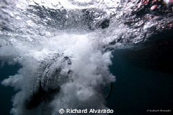 A diver back-rolls into a different world.  Taken with a ... by Richard Alvarado