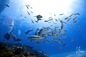 This image was taken during a dive at El Dorado Reef - Ba... by Steven Anderson