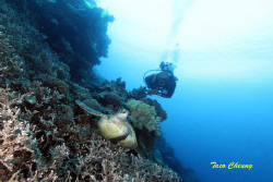 Turtle and Diver @ Apo Island by Taco Cheung