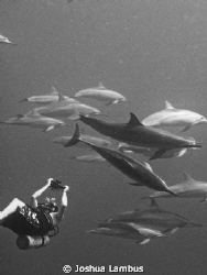 My buddy Dave with the local Hawaiian spinner dolphins. by Joshua Lambus