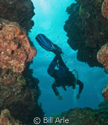 Osprey Reef.  Canon G-10 by Bill Arle