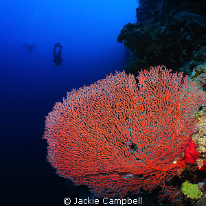 Red sea fan with my dive buddy.