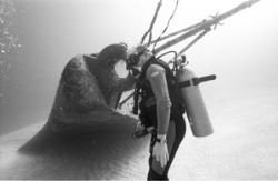 Depth 33m Natural light Diver off the Bow of the Tibbetts... by Keith Partlo