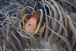 Haouse Reef Paradise, Tulamben - Bali by M Faizal Chandra Bayu