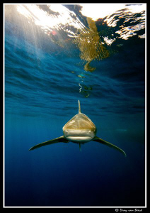 Shark!!!...... by Dray Van Beeck
