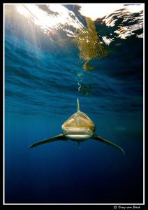 Shark!!!...... by Dray Van Beeck