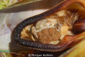 Green Mussel stuffed with crab. Tutukaka, NZ. by Morgan Ashton