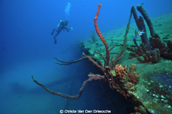 Hilma Hooker on Bonaire by Christa Van Den Driessche