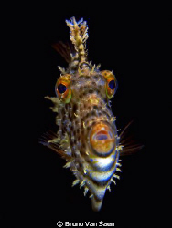 I wanted to make a picture of another fish, but this one ... by Bruno Van Saen