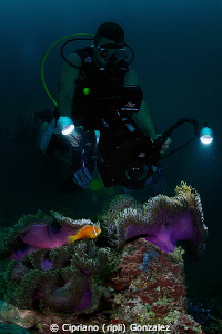 diver filming colorfull anemone by Cipriano (ripli) Gonzalez