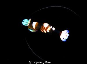 Shrimp by Jagwang Koo