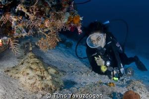 Wobegong and Diver... by Tunc Yavuzdogan