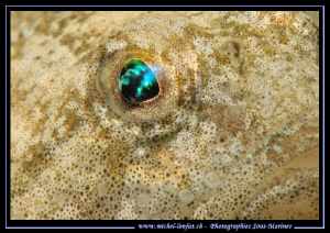 The beautiful eye of a Bullhead, one of my favorite Fresh... by Michel Lonfat