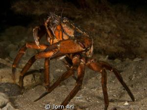 Dancing Crab by Jorn Ari