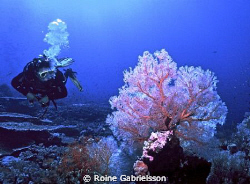 Great visibility, great soft coral. The Red Sea at its' b... by Roine Gabrielsson