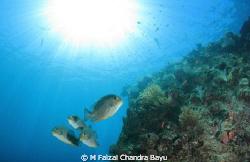 Liberty Wreck - Tulamben, Bali by M Faizal Chandra Bayu
