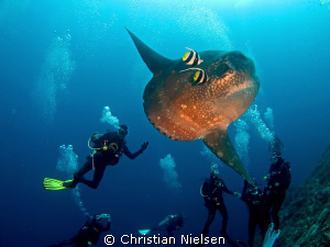 Good time. Hope the mola mola enjoyed it as much as the d... by Christian Nielsen