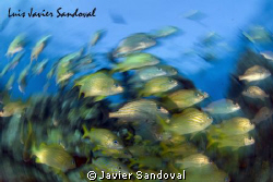 Fish Twister !!!! by Javier Sandoval