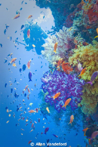 Coral Reef on the third day of our late September, 2010 v... by Allan Vandeford