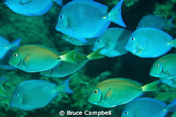 There is quite a wide variety of fish around Dog Island. by Bruce Campbell