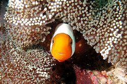 Puerto Galera (Philippines), Nikon Coolpix 5000 in Sea&Se... by Ugo Gaggeri
