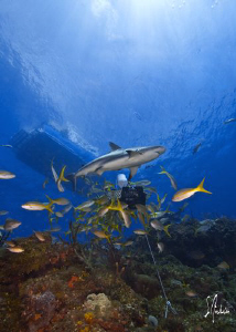 This image of a Reef Shark was taken during a dive at El ... by Steven Anderson