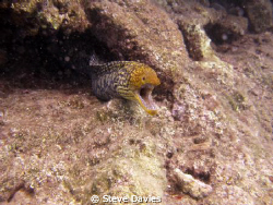 Colourful, and toothy, eel, MArmaris BAy, Oct 2010 by Steve Davies
