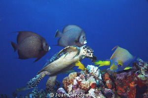 3 angels & sea turtle by Juan Cardona