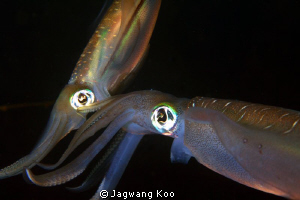 Mating of Squids by Jagwang Koo