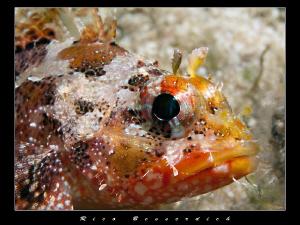 Rockfish potrait by Rico Besserdich