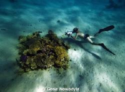 Underwater filming. by Gosia Nowodyla