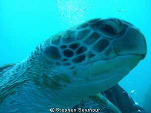 Turtle by Stephen Seymour