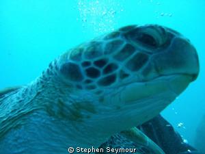 Turtle by Stephen Seymour