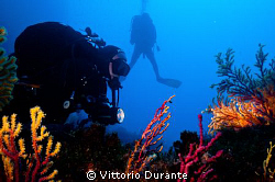 On the seabed. A diver illuminates a bicolor gorgonian. by Vittorio Durante