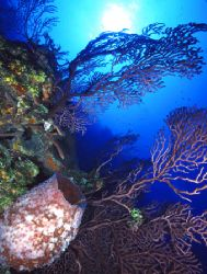 Bahamas Coral Reef (Nikon F4, 18mm/3.5, Aquatica housing,... by Andrew Dawson