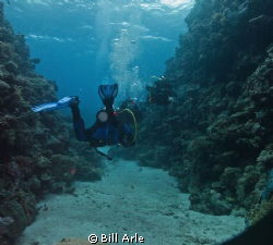 Coral Sea.  Canon G-10, Ikelite housing, strobes and dome. by Bill Arle