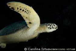 Turtle in Nha Trang, Vietnam by Caroline Istas