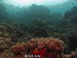 Reef scene.  Canon G-10, Ikelite housing, strobes and dome. by Bill Arle