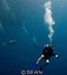Katja.  Coral Sea.  Canon G-10. by Bill Arle