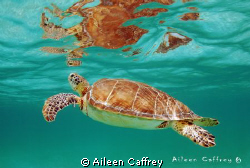 Coming up for Air, Akumal by Aileen Caffrey