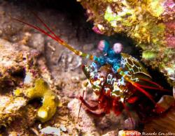 Debbie's Beach, Nha Trang. Mantis Shrimp. by Ricardo Gonzalez