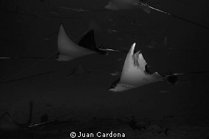 Shark Bite ! by Juan Cardona
