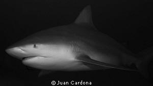 Toro .... by Juan Cardona