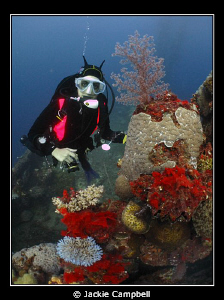 Diver with coral on one of the wrecks in Truk Lagoon.