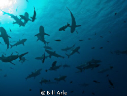 Shark dive.  Coral Sea.  Canon G-10, Ikelite housing. by Bill Arle